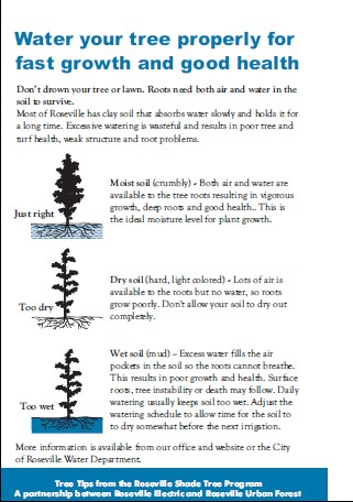 How to Water Your Tree
