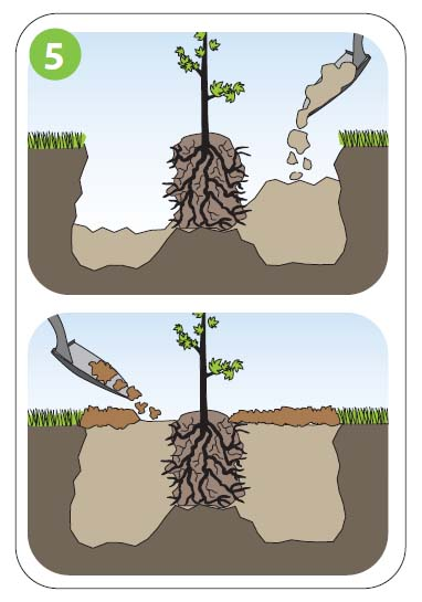 how to plant5