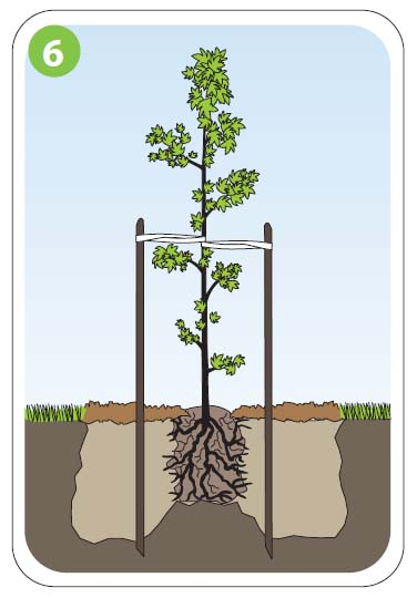 how to plant6